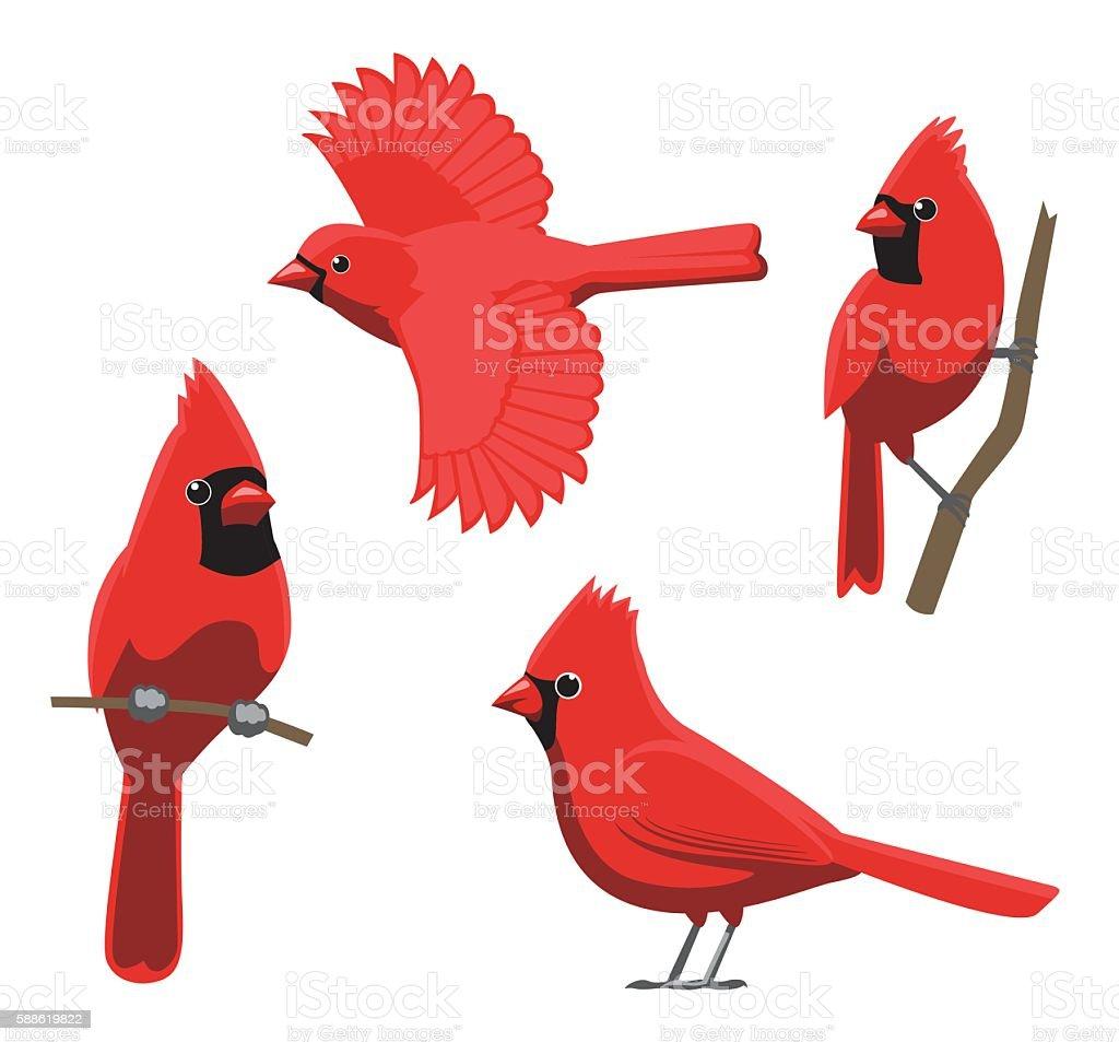 cardinal bird illustrations