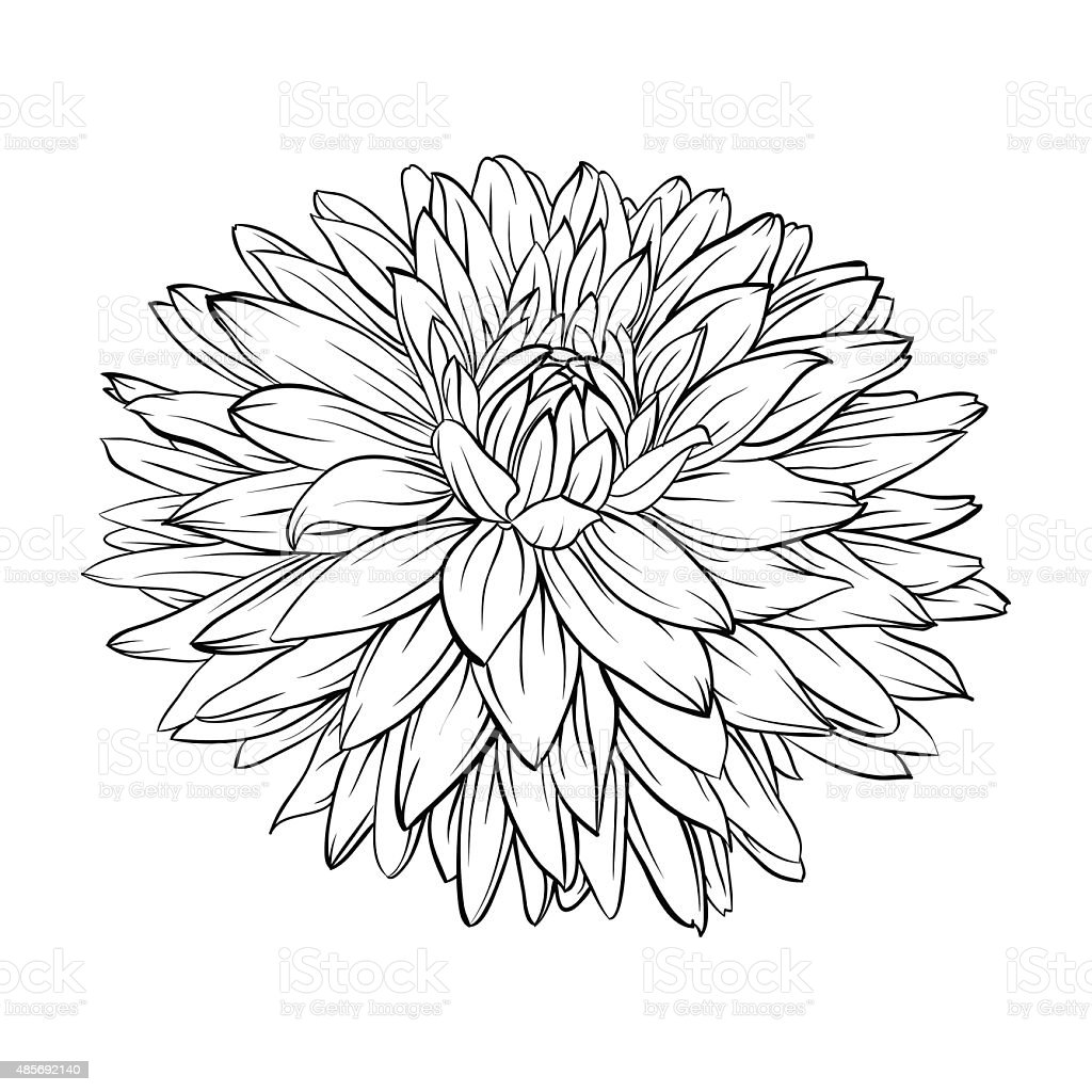Black And White Dahlia Flower Isolated Handdrawn Contour