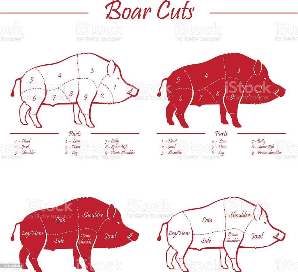 hight resolution of boar meat cut diagram royalty free boar meat cut diagram stock vector art amp