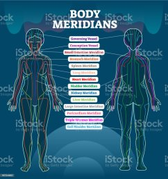 body meridian system vector illustration scheme chinese energy rh istockphoto com medical person diagram man diagram [ 964 x 1024 Pixel ]