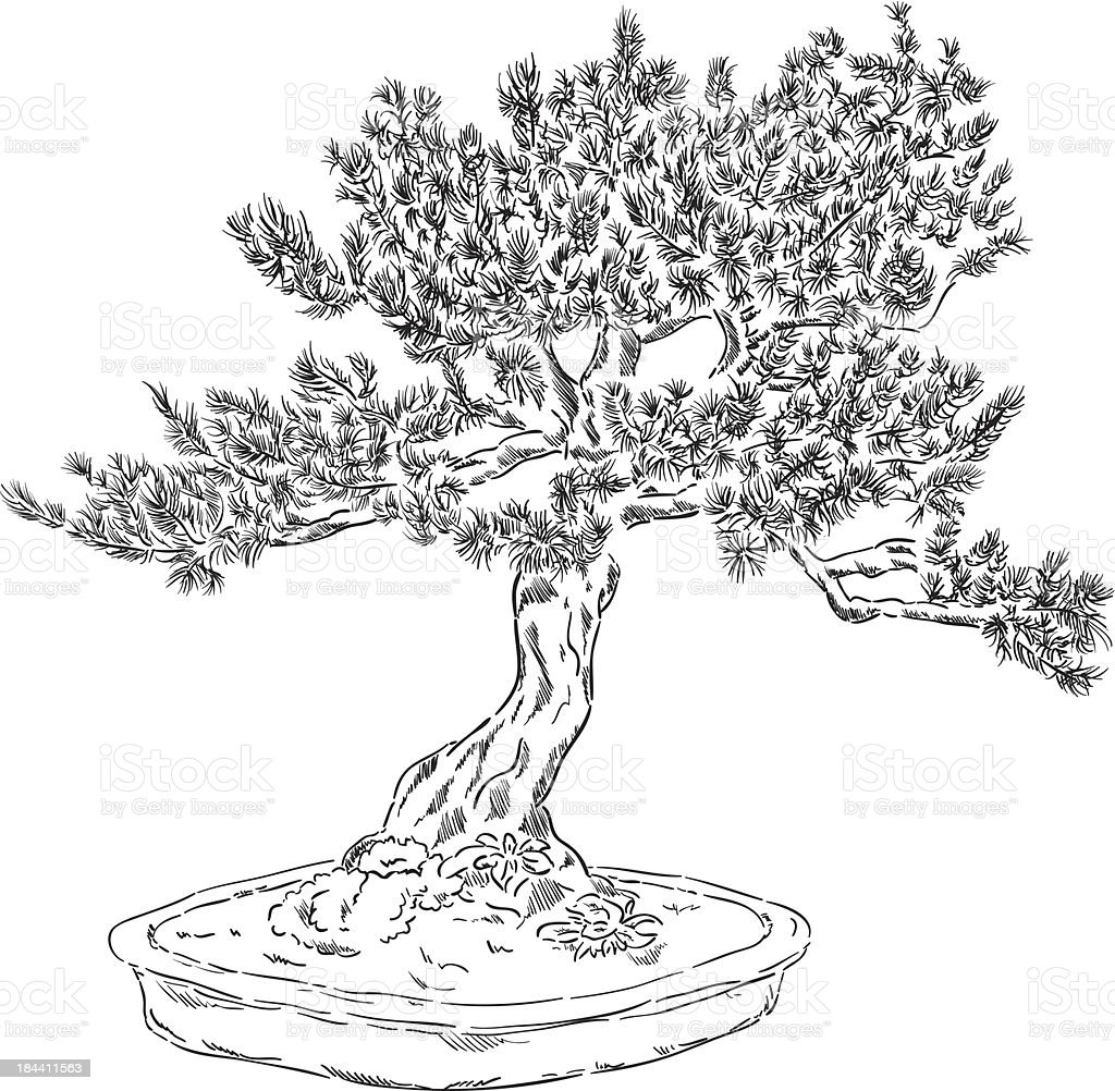 Bonsai Tree Stock Vector Art & More Images of Art