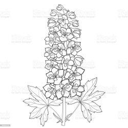 larkspur flower delphinium stem bunch bud leaf vector background illustration clip isolated illustrations floral royalty similar