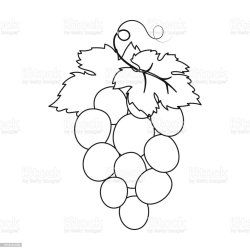 Bunch Of Wine Grapes Icon In Outline Style Isolated On White Background Spain Country Symbol Stock Vector Illustration Web Stock Illustration Download Image Now iStock