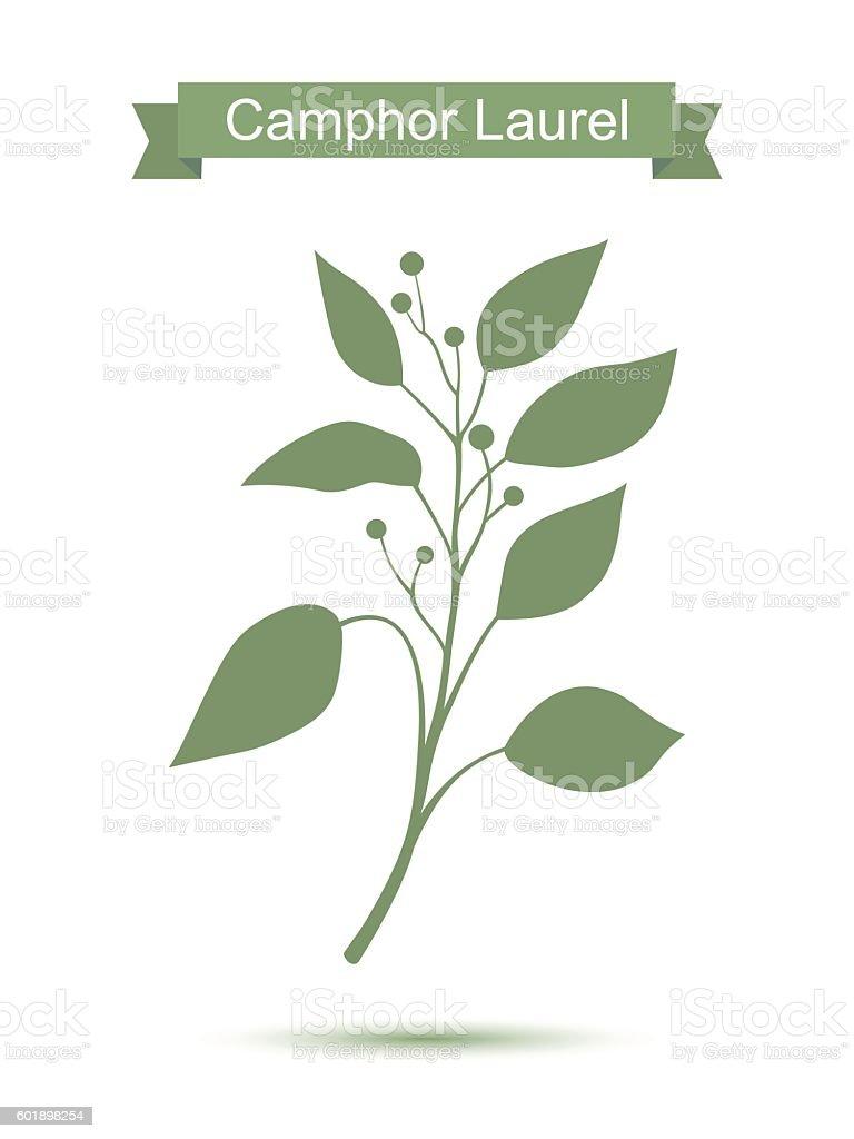 Camphor Laurel Branch Green Silhouette - アロマテラピーのベクターアート素材や畫像を多數ご用意 - iStock