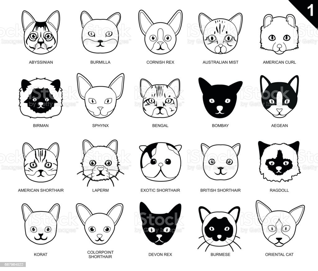 cat faces icon cartoon