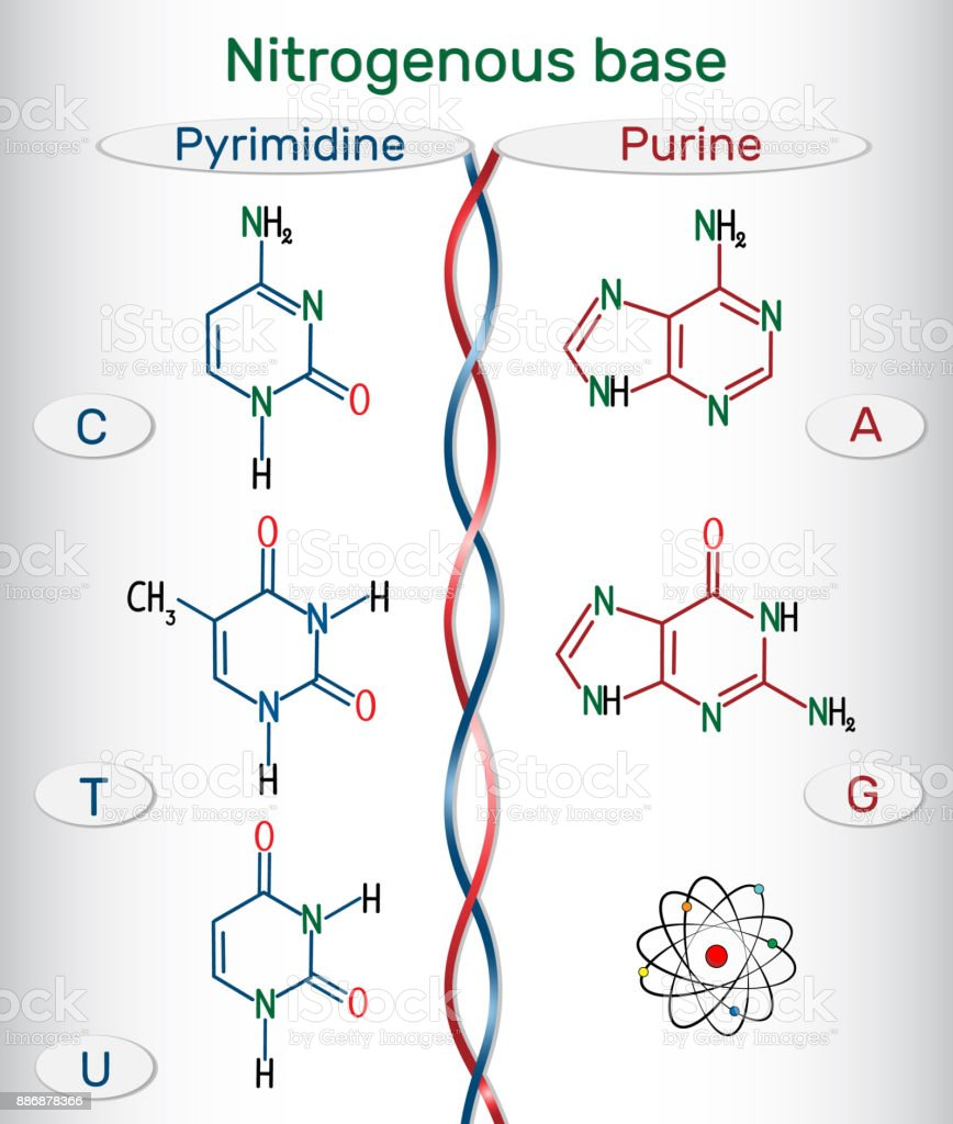 hight resolution of chemical structural formulas of purine and pyrimidine nitrogenous bases adenine a ade