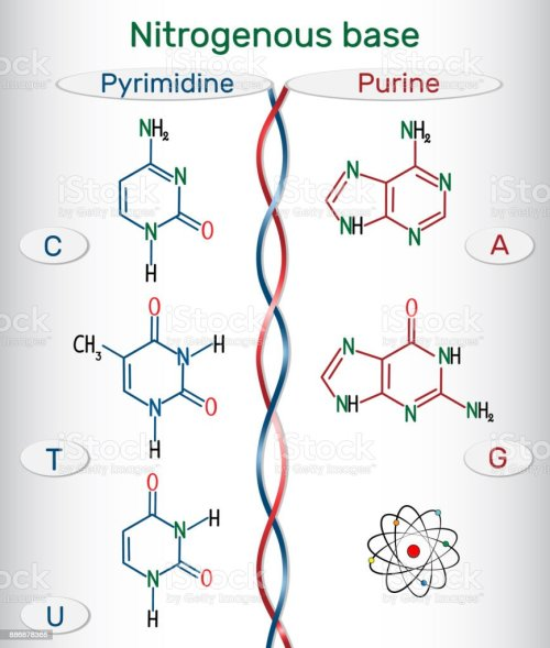 small resolution of chemical structural formulas of purine and pyrimidine nitrogenous bases adenine a ade