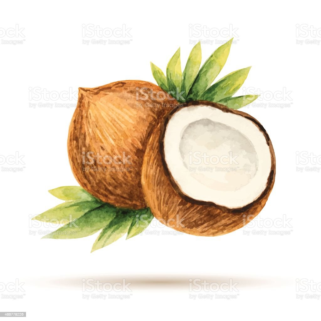 royalty free coconut clip art