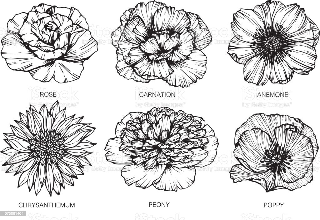 collection of flowers drawing
