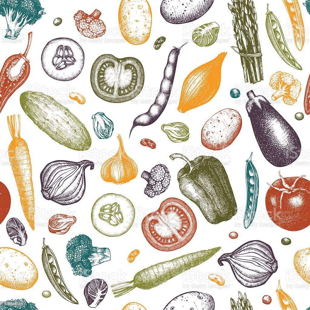 fall vegetables illustrations