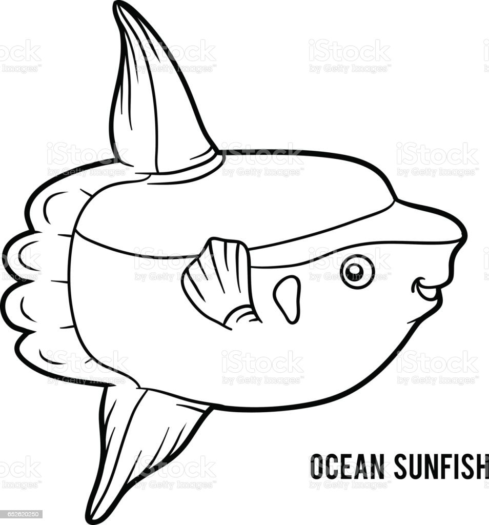Coloring Book Ocean Sunfish Stock Vector Art & More Images