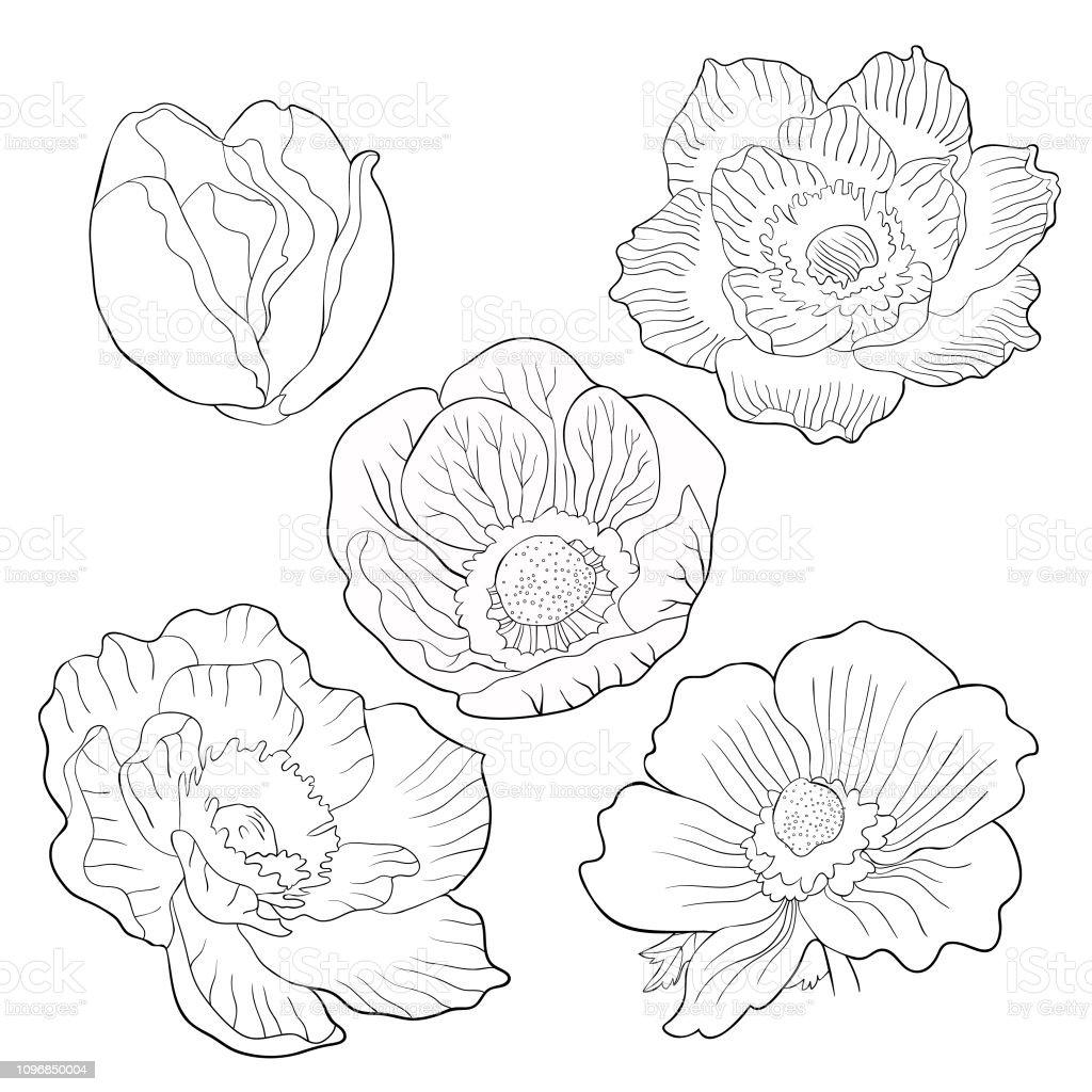 Malvorlage Blume Blüte