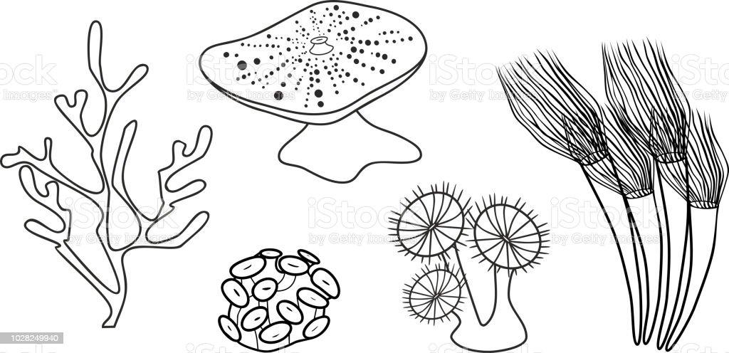Malvorlagen Verschiedene Korallen Stock Vektor Art und
