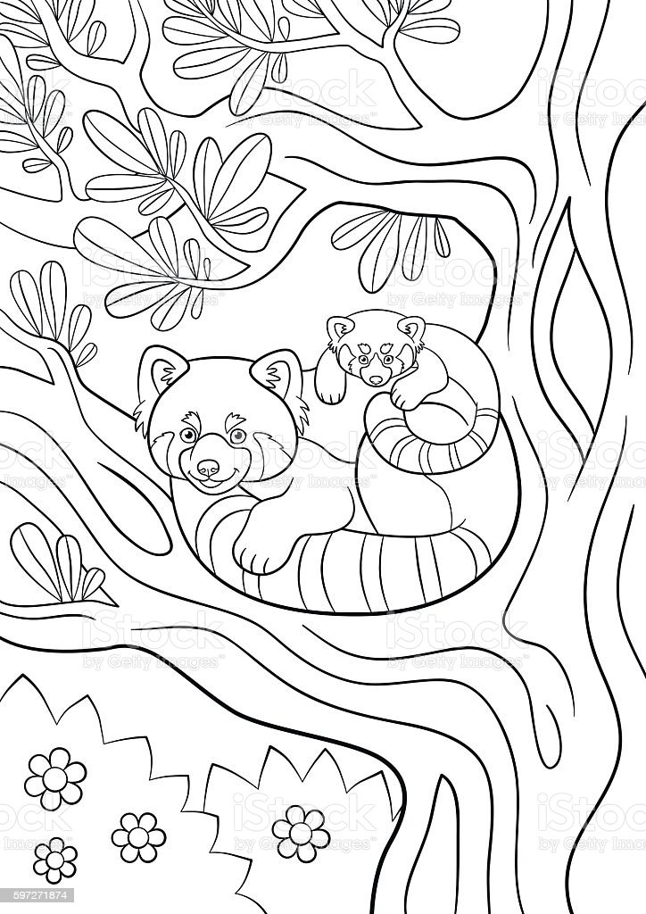 Coloring Pages Mother Red Panda With Her Cute Baby Stock