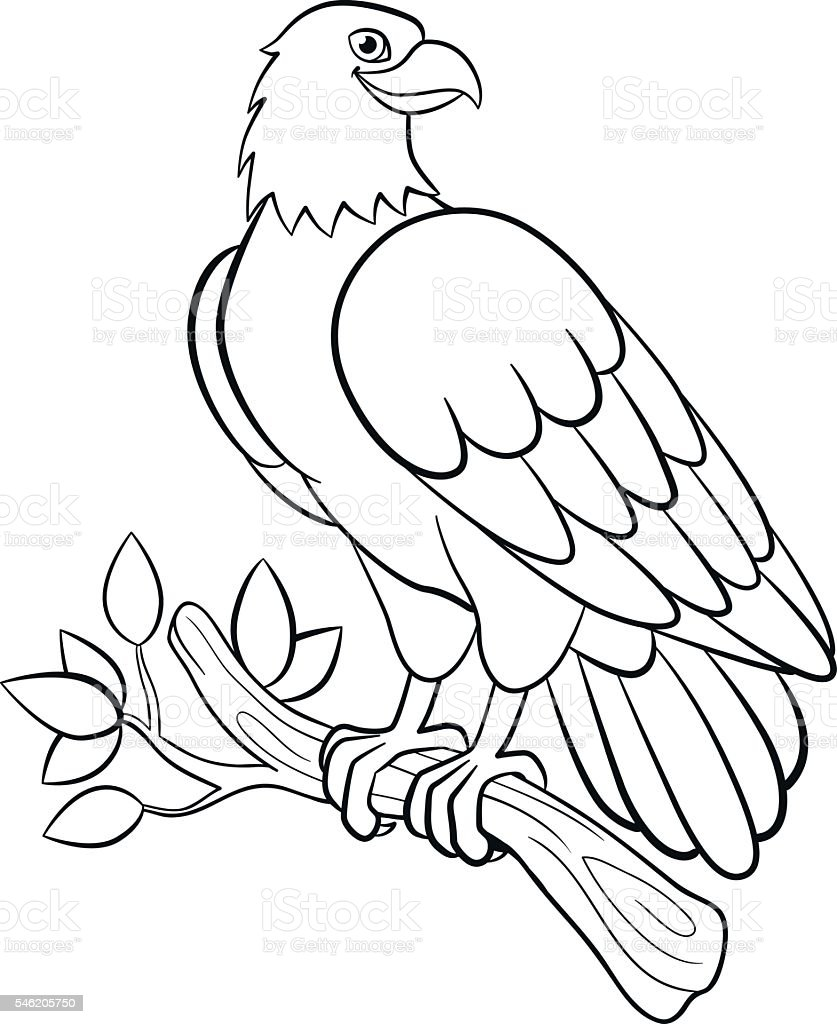 Coloring Pages Wild Birds Cute Smiling Eagle Stock