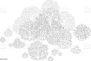 36 Korallen Zum Ausmalen   Besten Bilder von ausmalbilder