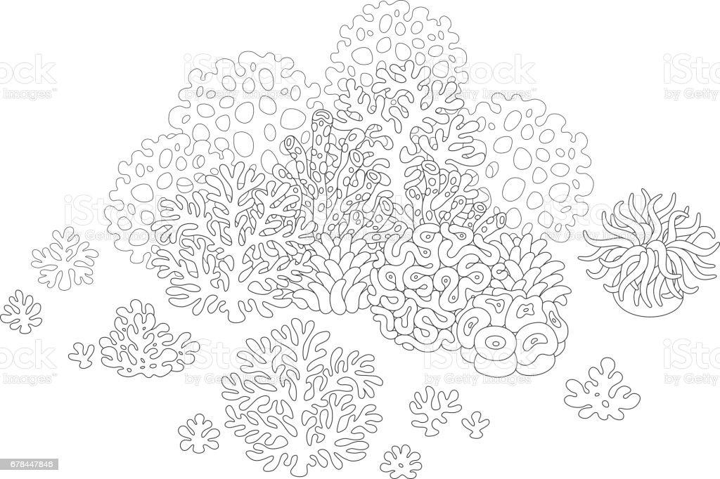 36 Korallen Zum Ausmalen - Besten Bilder von ausmalbilder