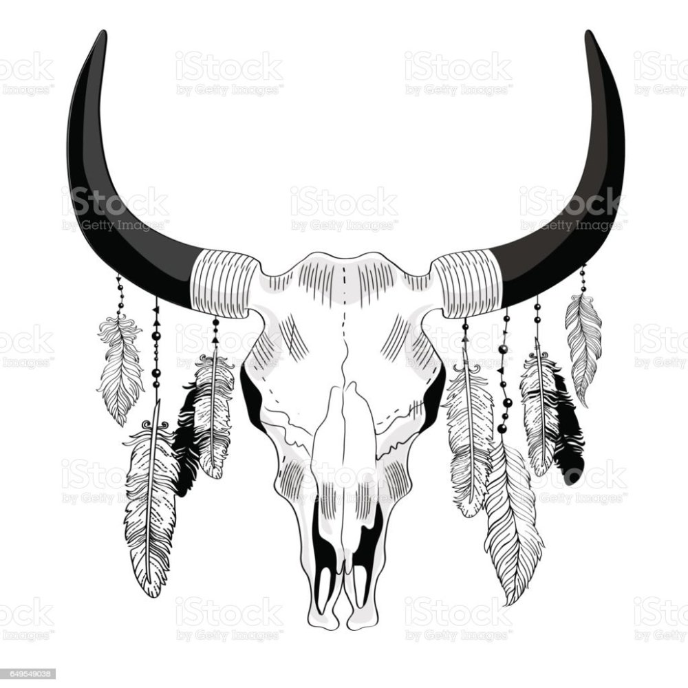 medium resolution of cowskull with feathers illustration