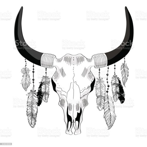 small resolution of cowskull with feathers illustration