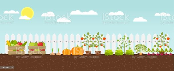 37 729 Vegetable Garden Illustrations Royalty Free Vector Graphics & Clip Art iStock