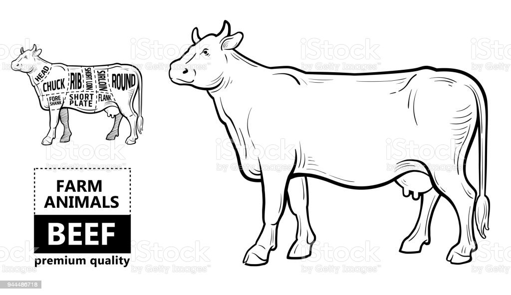 vintage diagram three line solar cut of beef set poster butcher cow typographic hand drawn