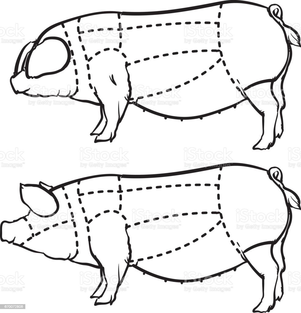 medium resolution of cut of pig set hand drawn outline pig isolated on white background drawing vector