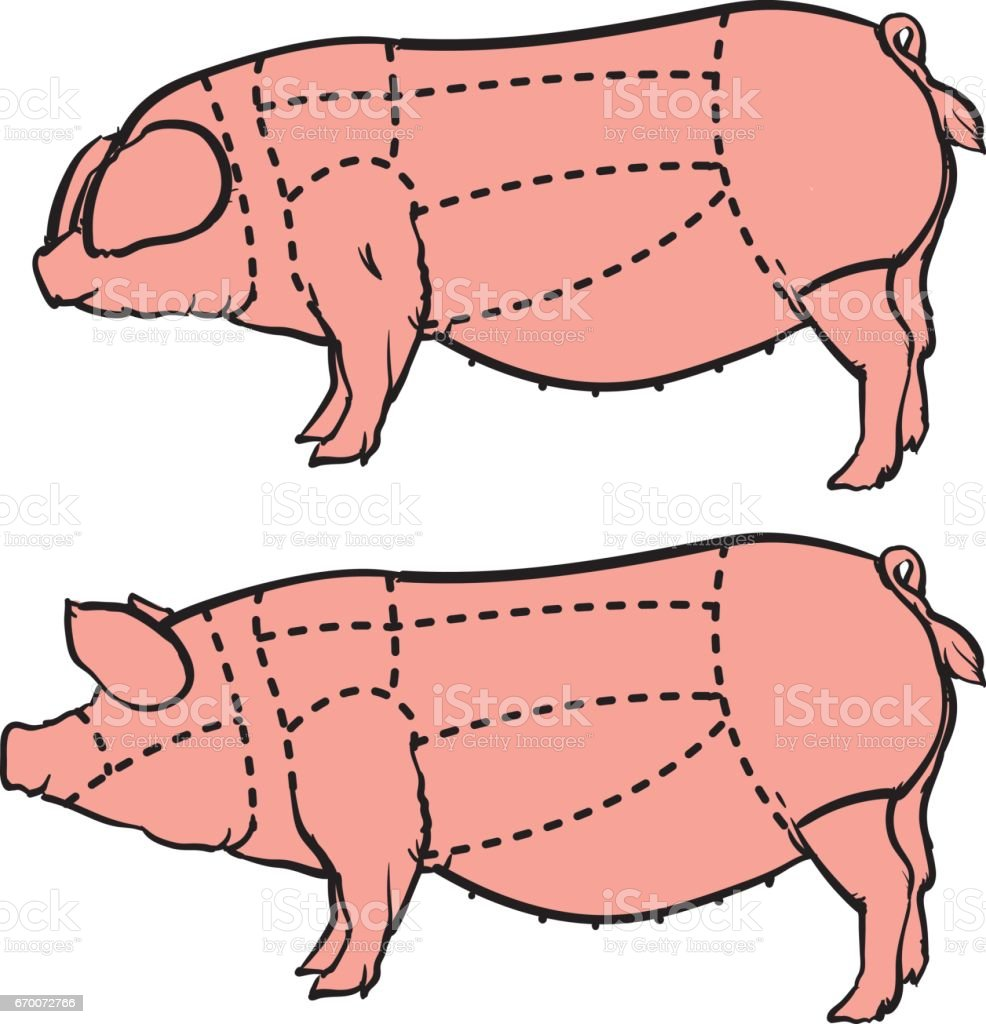 medium resolution of cut of pig set hand drawn pig isolated on white background drawing vector illustration butcher diagram illustration