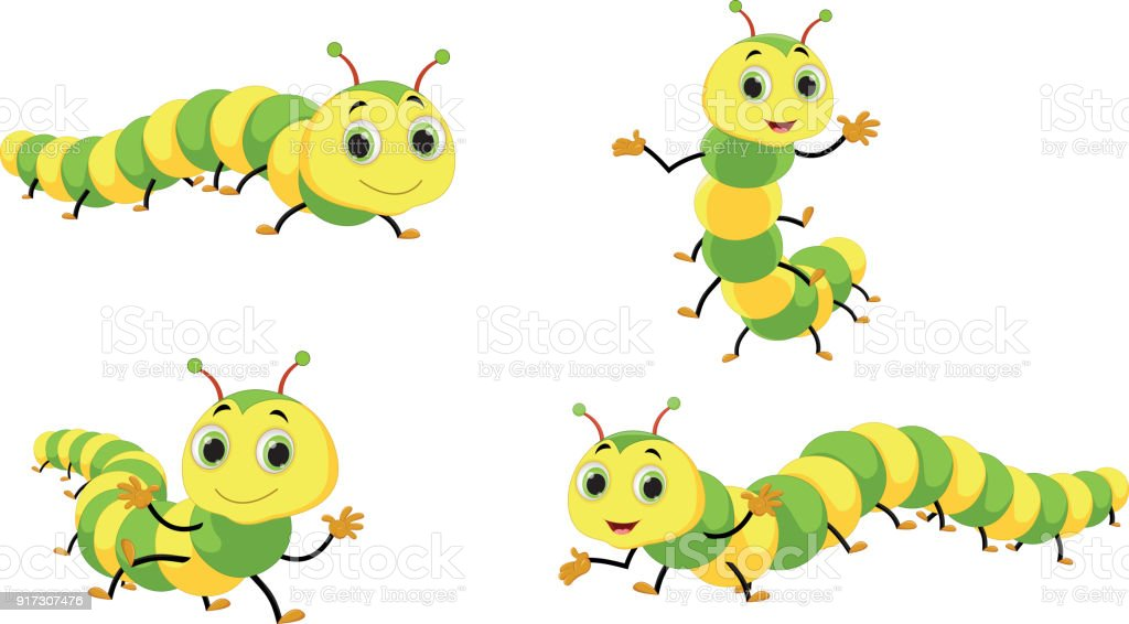 caterpillar illustrations