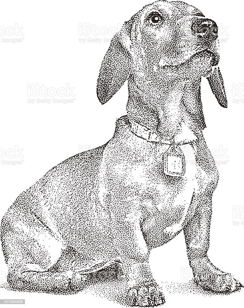 dachshund illustrations royalty-free