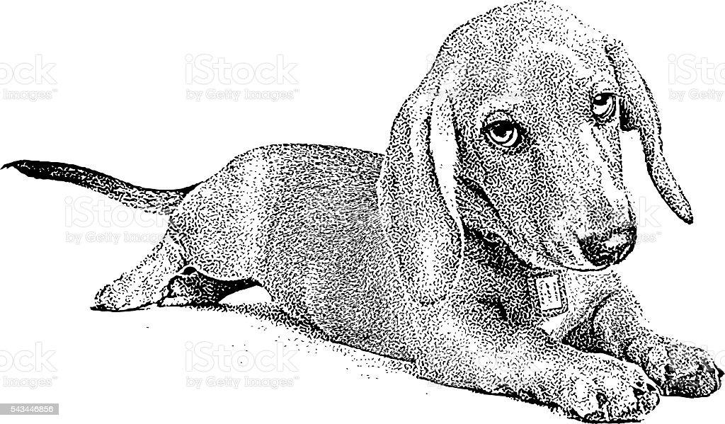royalty free dachshund clip art