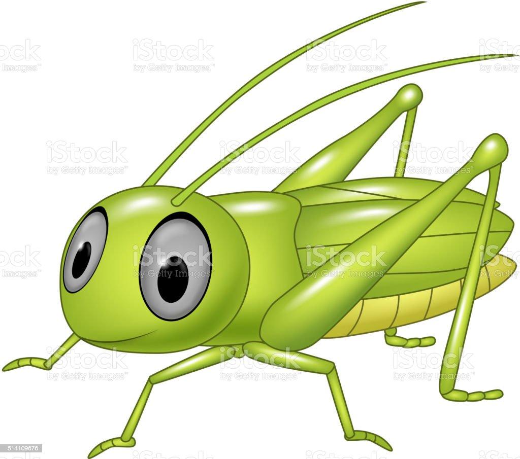 orthoptera illustrations