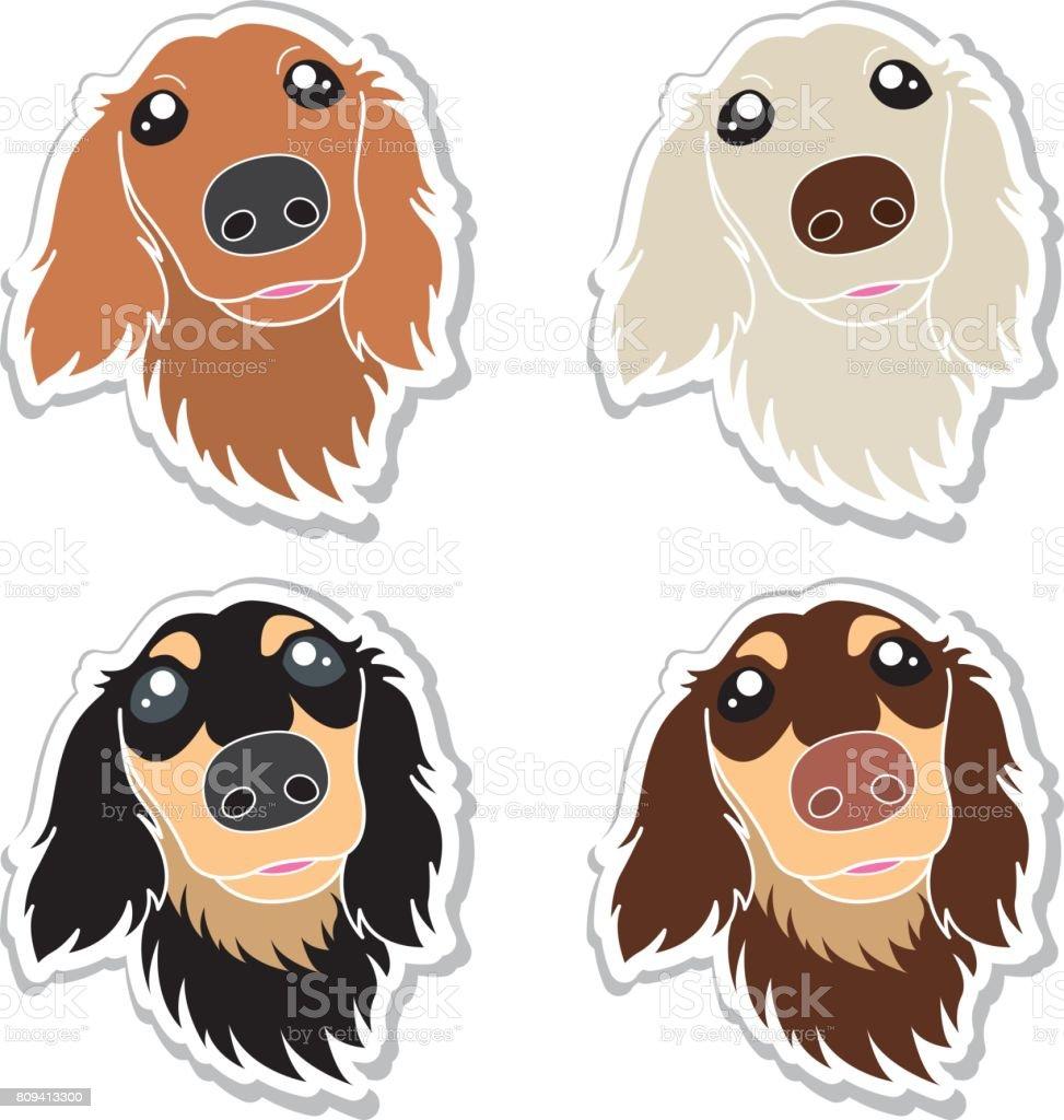royalty free miniature dachshund
