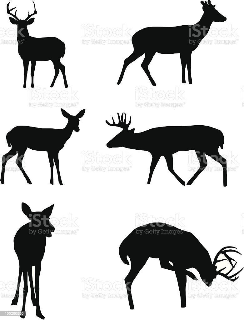 best whitetail deer illustrations
