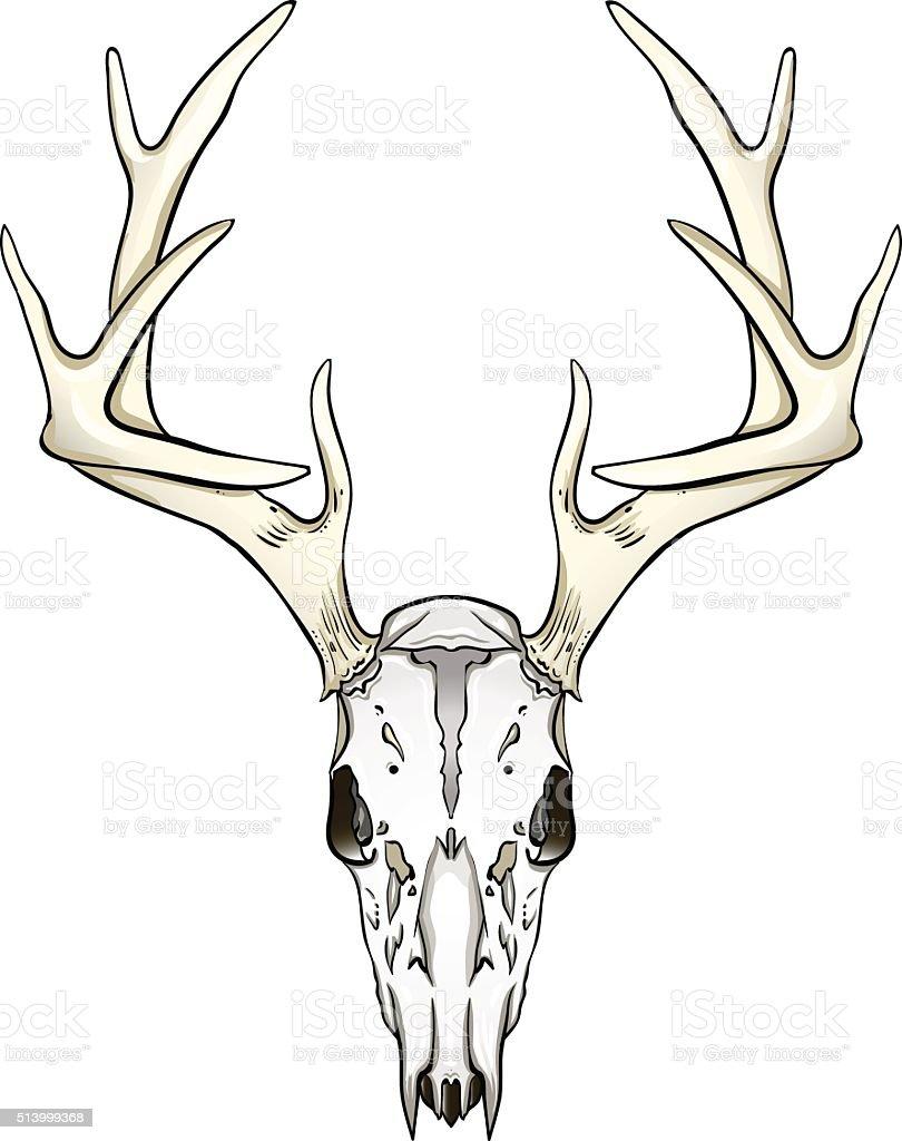 Deer Skull Vector : skull, vector, Skull, Vector, Graphics, Freevector.com