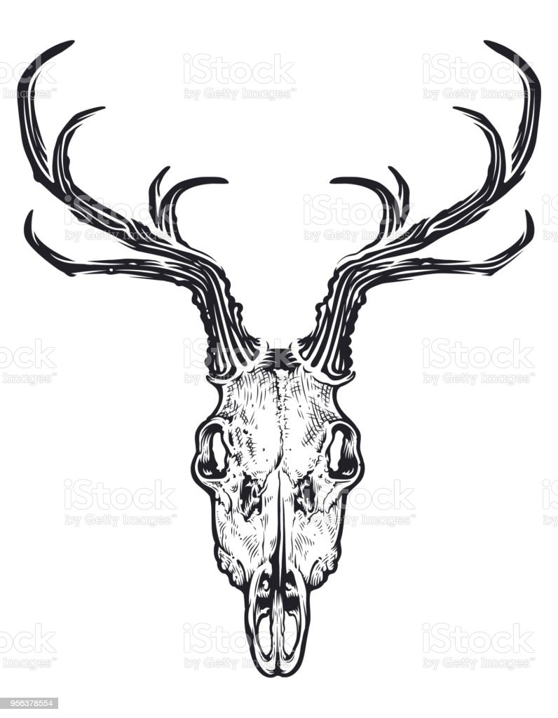 Deer Skull Vector : skull, vector, Skull, Vector, Stock, Illustration, Download, Image, IStock