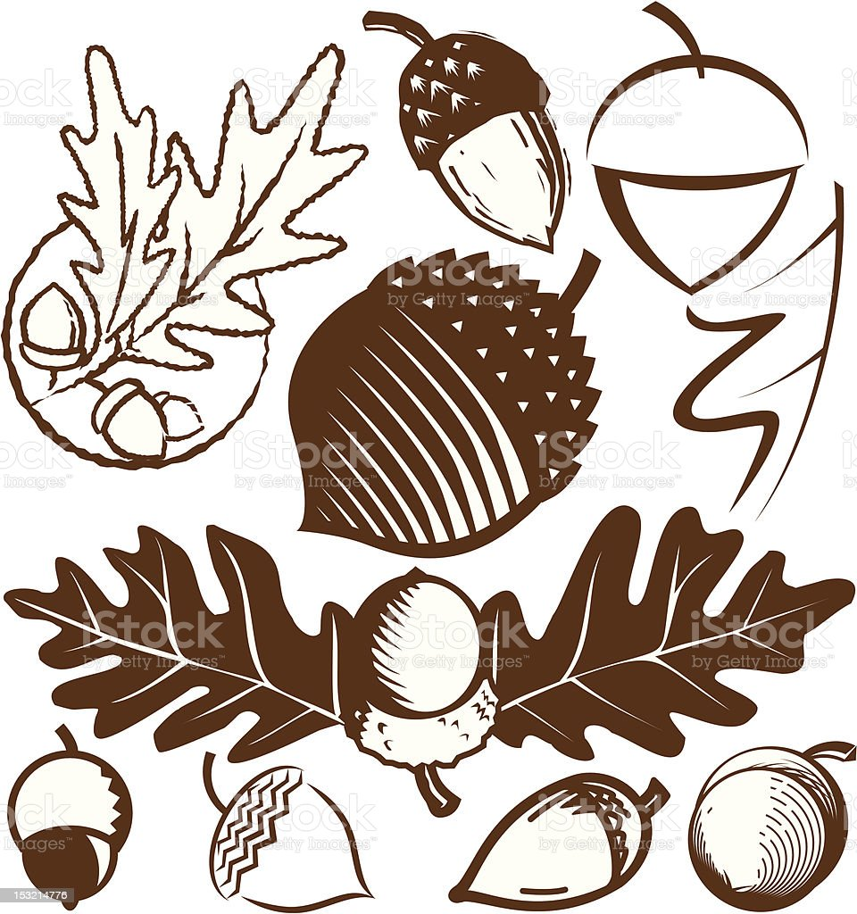 royalty free acorn clip art vector