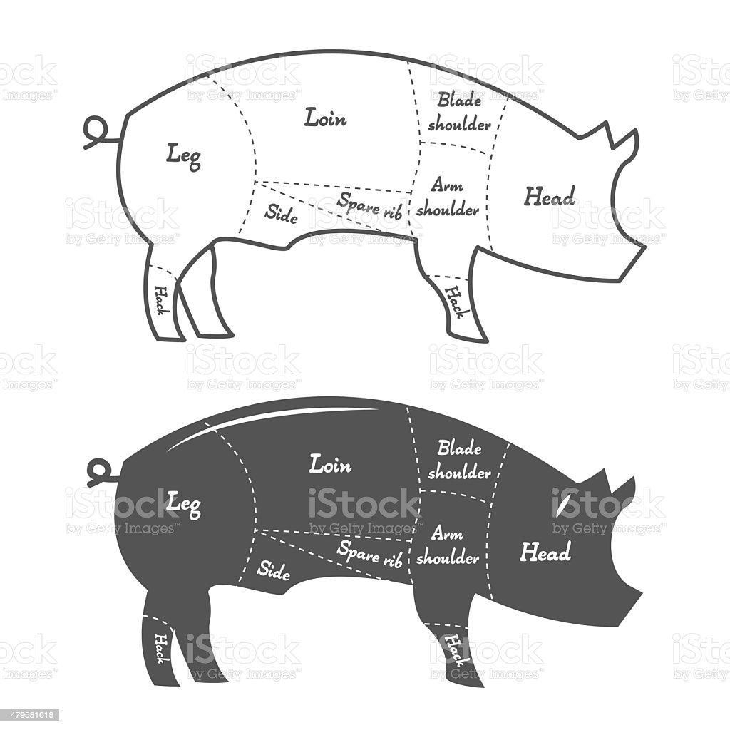 hight resolution of detailed illustration diagram scheme or chart of pork cuts illustration