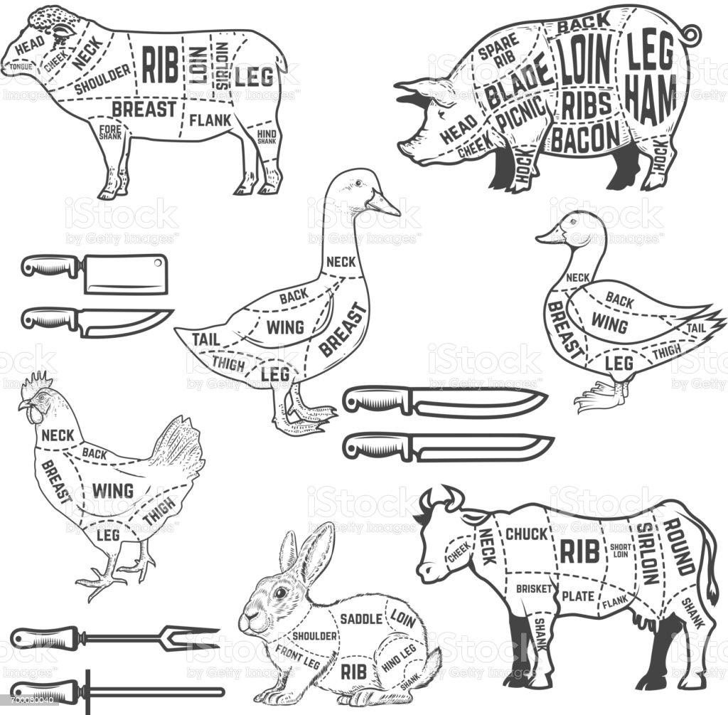 duck wing diagram lewis dot for k guide cutting meat lamb goose pork cow rabbit chicken design elements poster menu restaurant flyer