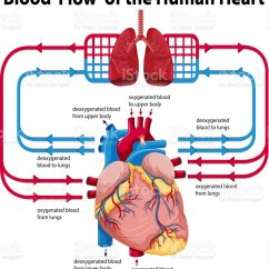 Human Heart And Lungs Diagram Cadet Baseboard Heater Wiring Showing Blood Flow Of Stock Vector Art More Images Anatomy 610954454 Istock