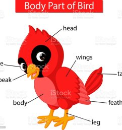 diagram showing body part of red cardinal bird royalty free diagram showing body part of [ 1024 x 1024 Pixel ]