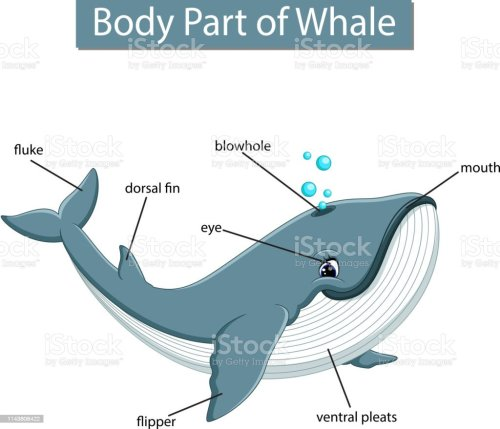 small resolution of diagram showing body part of whale illustration