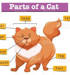 diagram showing parts of cat royalty free diagram showing parts of cat stock vector art [ 1024 x 899 Pixel ]