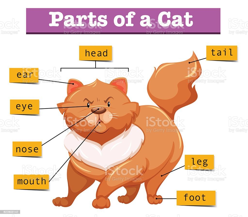 hight resolution of diagram showing parts of cat royalty free diagram showing parts of cat stock vector art