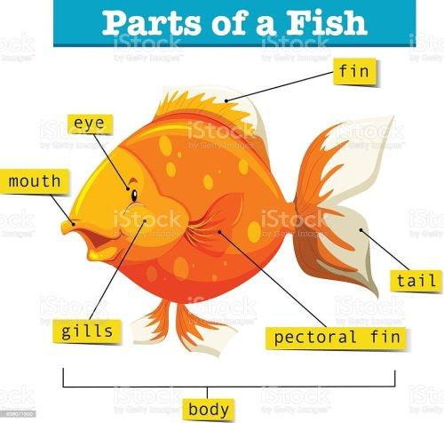 small resolution of body parts diagram of fish wiring diagram fuse box u2022 2002 kia sportage engine