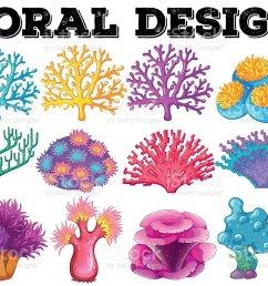 diferentes tipos de coral dise o ilustraci n de diferentes tipos de coral dise o y m s vectores libres [ 1024 x 799 Pixel ]