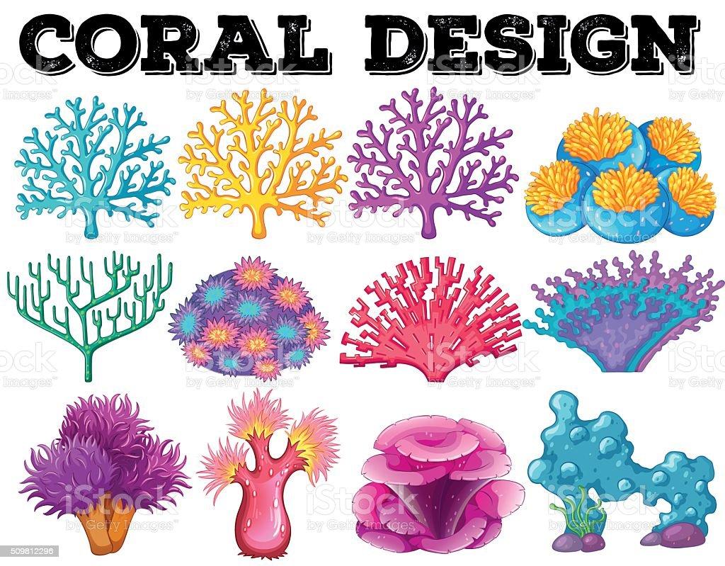 hight resolution of diferentes tipos de coral dise o ilustraci n de diferentes tipos de coral dise o y m s vectores libres