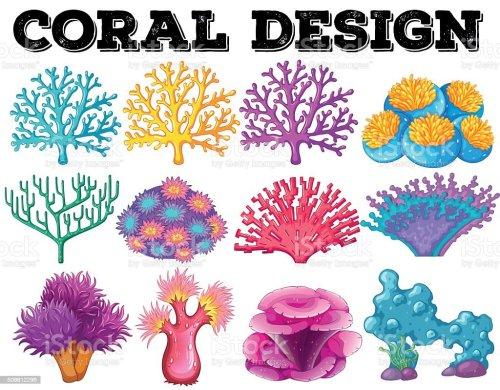 small resolution of diferentes tipos de coral dise o ilustraci n de diferentes tipos de coral dise o y m s vectores libres