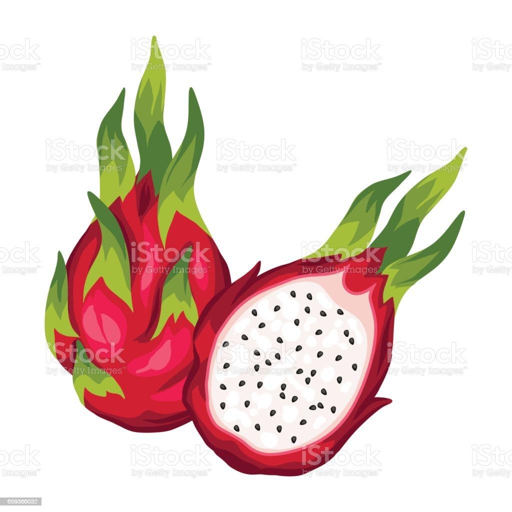 royalty free pitaya clip art vector