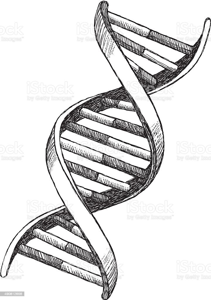 Dna Easy Drawing : drawing, Drawing, Stock, Illustration, Download, Image, IStock