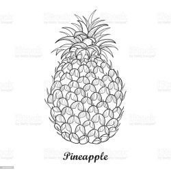 Drawing With Outline Ananas Or Pineapple Fruit And Leaf In Black Isolated On White Stock Illustration Download Image Now iStock